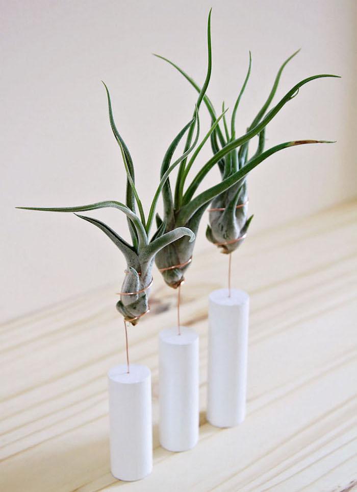 """14 элегантных способов добавить """"воздушное растение"""" в Ваш интерьер"""